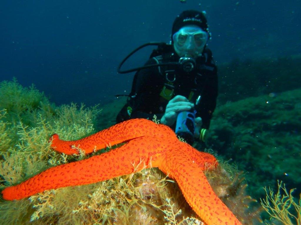 sea star diving in mallorca