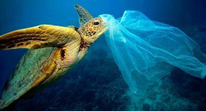 mediterraneo plastico tortuga en el mar