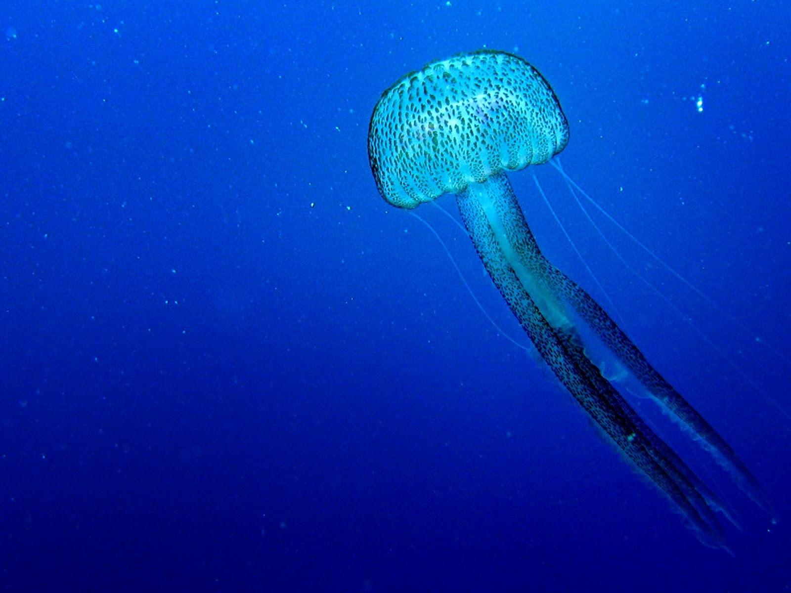 como protegerse contra las medusas